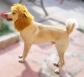 gianco-leon